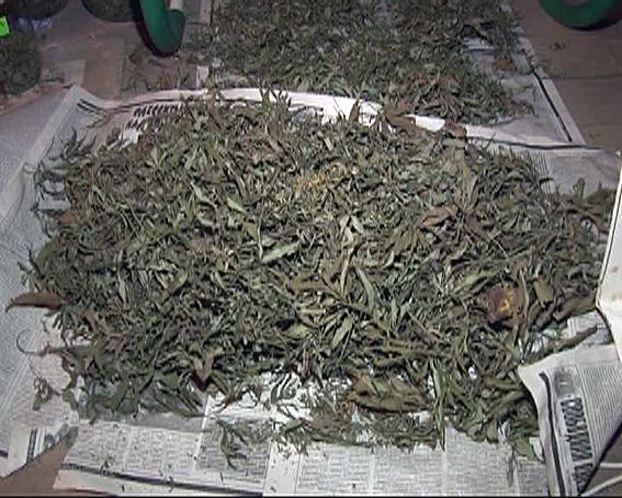 В Измаиле милиция обнаружила 50 кг марихуаны на продажу