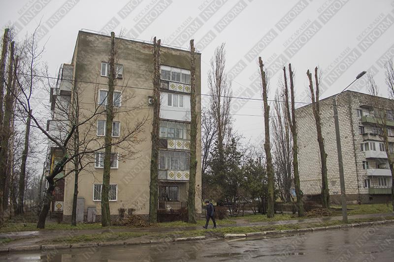 """В Измаиле ЖКХ масштабно """"чистит"""" деревья! (фото)"""
