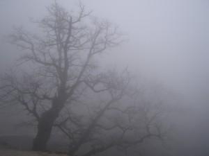 ГАИ Одесской области: осторожно, на дорогах туман