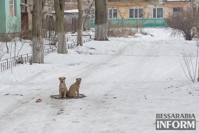 Фото дня: как собаки в Белгород-Днестровском спасаются от холодов