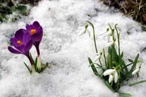 Февраль в Украине будет аномально теплым