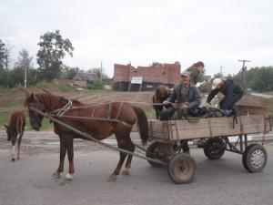 В Измаиле украли... коня с телегой