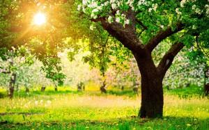 Ближе к 9 мая начнется потепление в Бессарабии