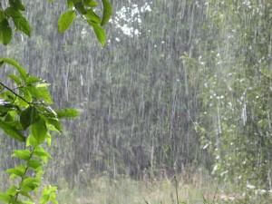 Завтра в Украине снова дожди