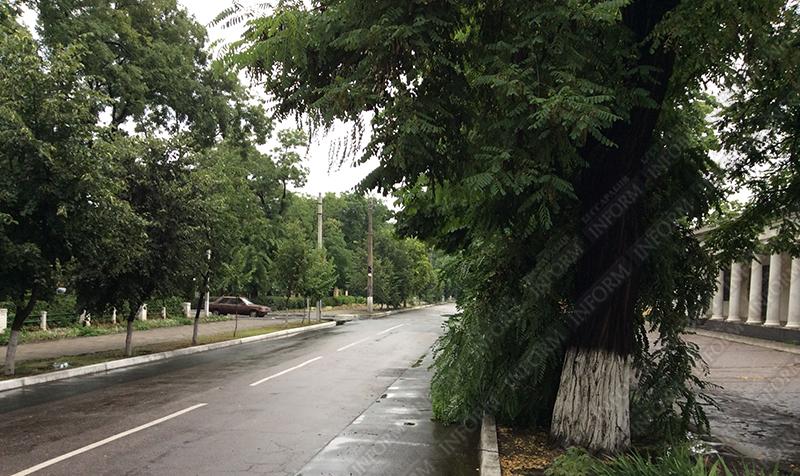 Получасовая гроза в Измаиле успела повалить деревья (фото)