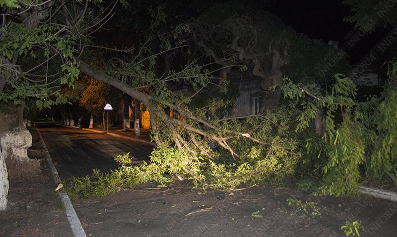 В Измаиле обвалившаяся ветвь дерева перекрыла проезжую улицу (фото)