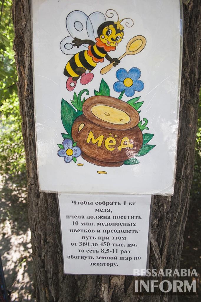 medspas-izmail-4-682x1024 В центре Измаила проходит медовая ярмарка (фото)