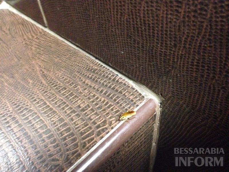 """Измаил: в кафе """"Таврия В"""" снова засекли тараканов (фото, видео)"""
