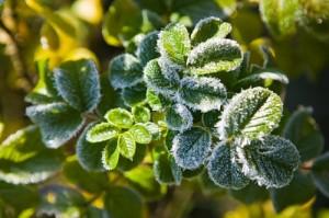 Завтра в Бессарабии первые заморозки