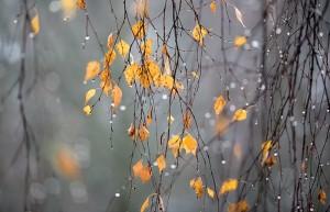 november-300x193 Завтра в Украине сухо и относительно тепло