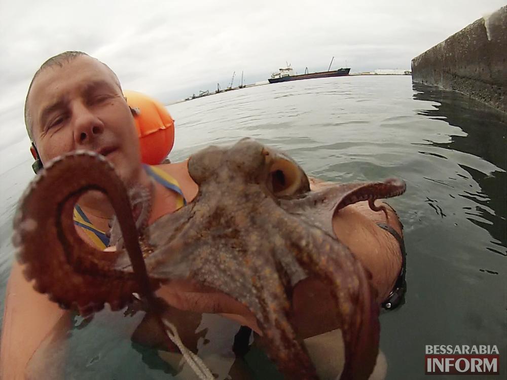 papushenko-i-osminog-1 ВИДЕО дня: измаильчанин в Греции совершил заплыв с...осьминогом