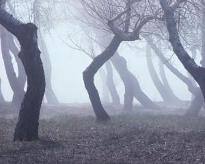 00526125-300x240 Завтра в Бессарабии сильный туман