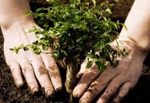 1328998690_posadka1-300x206 Измаильчан приглашают принять участие в посадке деревьев