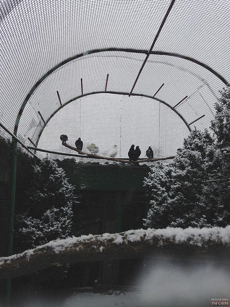 Измаил: Вот и наступила зима (фоторепортаж)