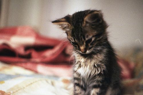 sad-cat-beauty-Favim.com-584704 30 ноября - Международный день домашних животных