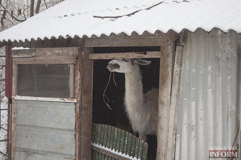 Мини-зоопарку Измаила помогают волонтеры (ФОТО)