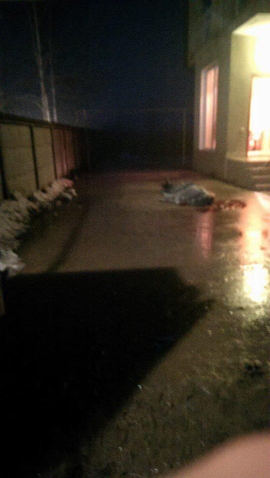 Под Одессой за долги застрелены три человека (фото, видео, обновлено)