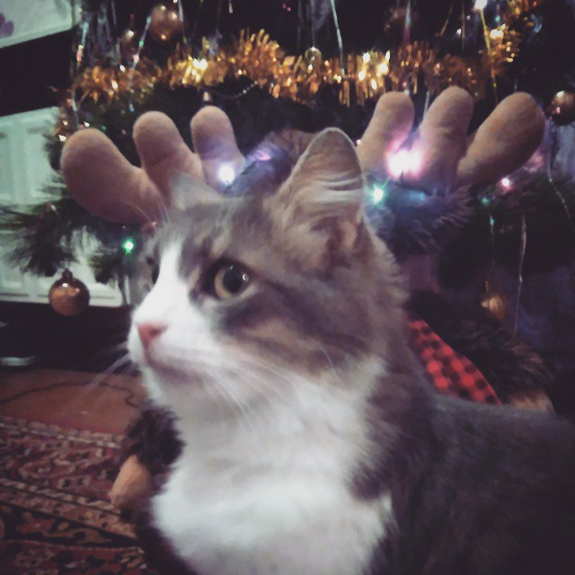 19 Новогодняя ночь: Что публиковали Измаильчане в Instagram (фото)