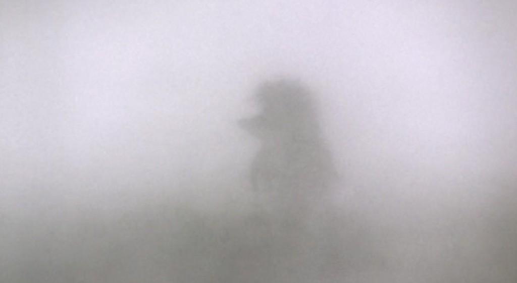 Сегодня в Бессарабии сыро, туман и ветер
