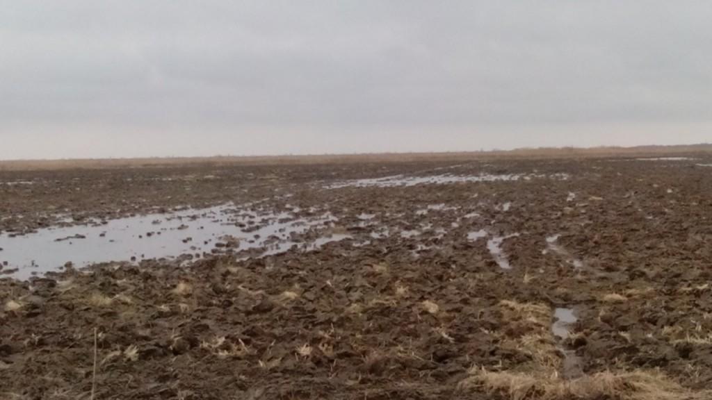 В Килие Дунай затопил рисовые поля - власти не справляются (фото)