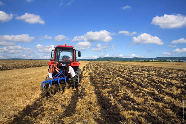 1267 Проблемы аграриев аукнутся новым подорожанием продуктов питания