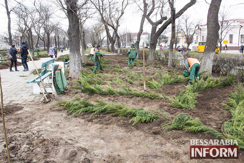 Казацкий можжевельник украсит парки Измаила(фото)