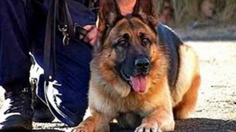 Собака-пограничник помогла задержать убийцу