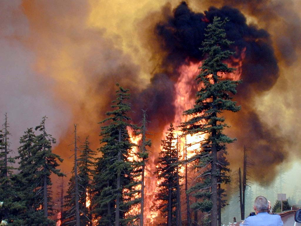 88e2f9ed97e65840b812ca37fadbd07e-1024x768 Под Чернобылем бушует мощный лесной пожар