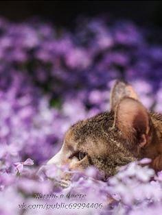Фотоподборка: Жизнь в цвете