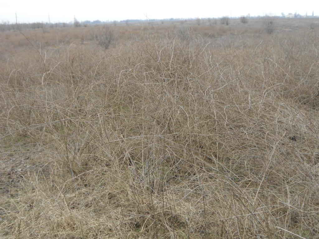 Б.-Днестровский р-н: жители Шабо не могут пользоваться  своей землей из-за угроз иностранца (фото)