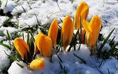 i11 Водный и цветущий апрель