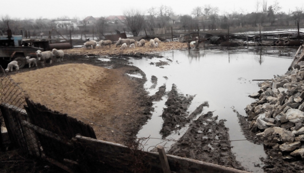 Ренийский район: из-за затяжных дождей подтоплено несколько сотен домов(видео)