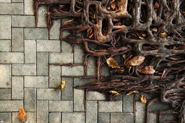 Фотоподборка: Битва природы и цивилизации