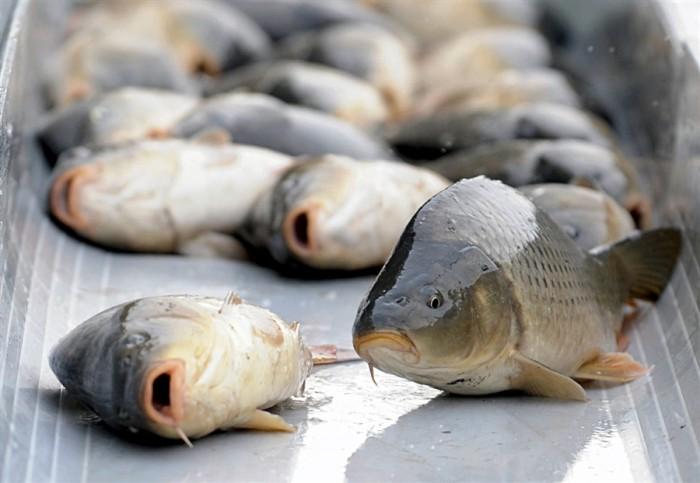 В Бессарабии  наложили запрет на вылов рыбы (видео)