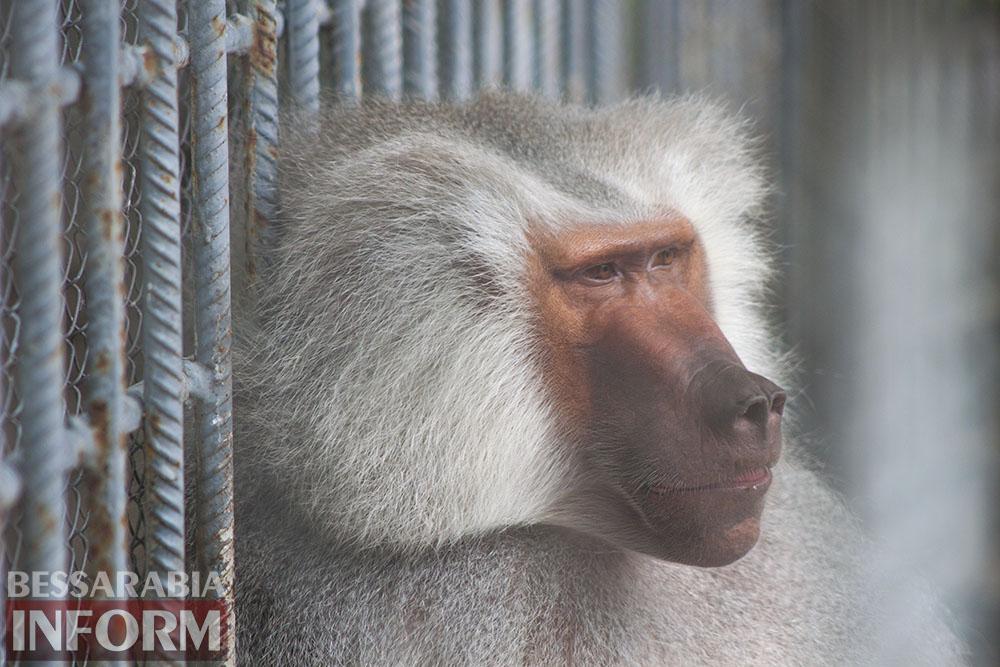 10 Измаильская СЮН: колорит мини-зоопарка(фоторепортаж)