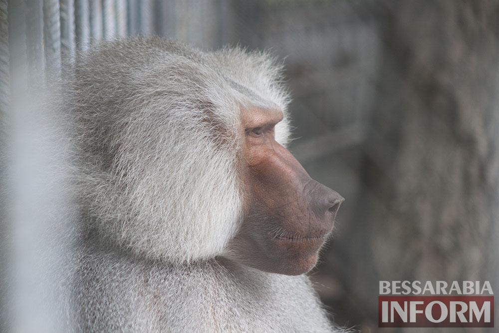 114 Измаильская СЮН: колорит мини-зоопарка(фоторепортаж)