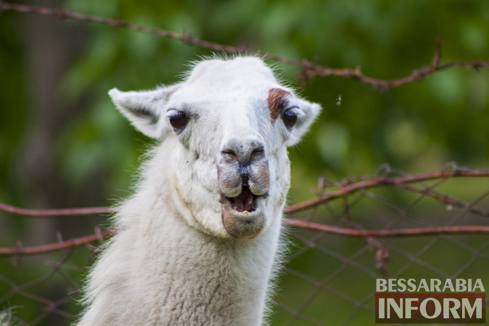 13 Измаильская СЮН: колорит мини-зоопарка(фоторепортаж)