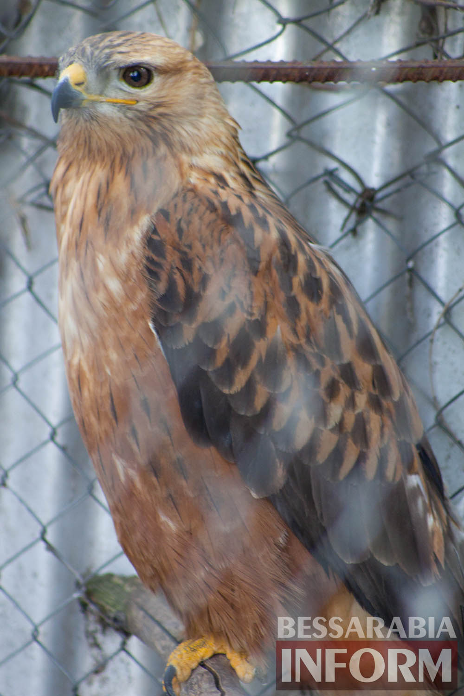 131 Измаильская СЮН: колорит мини-зоопарка(фоторепортаж)