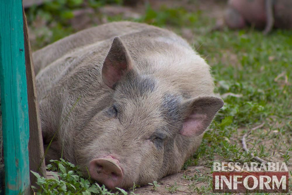 18 Измаильская СЮН: колорит мини-зоопарка(фоторепортаж)