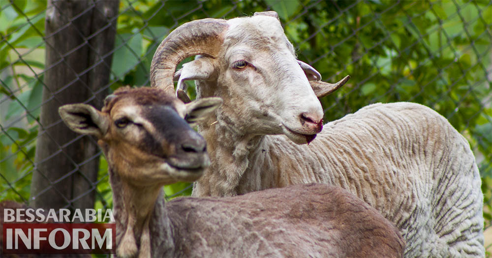 2 Измаильская СЮН: колорит мини-зоопарка(фоторепортаж)