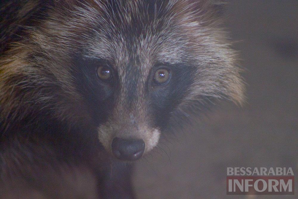 20 Измаильская СЮН: колорит мини-зоопарка(фоторепортаж)
