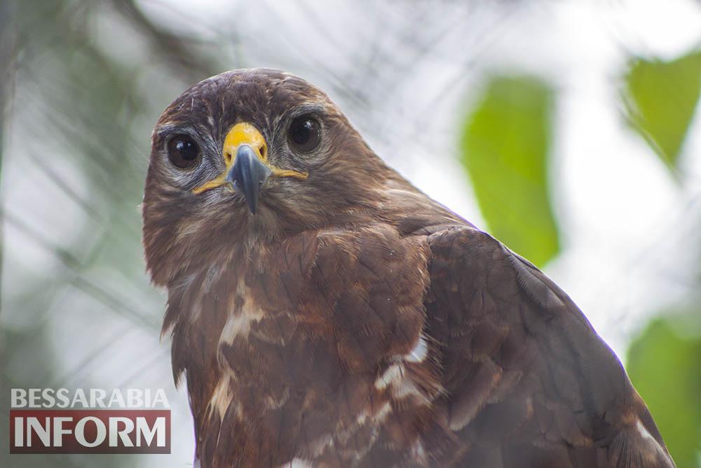 32 Измаильская СЮН: колорит мини-зоопарка(фоторепортаж)