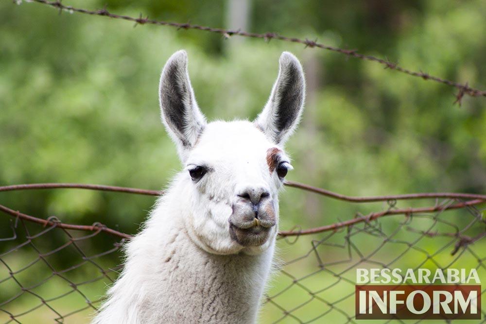 43 Измаильская СЮН: колорит мини-зоопарка(фоторепортаж)