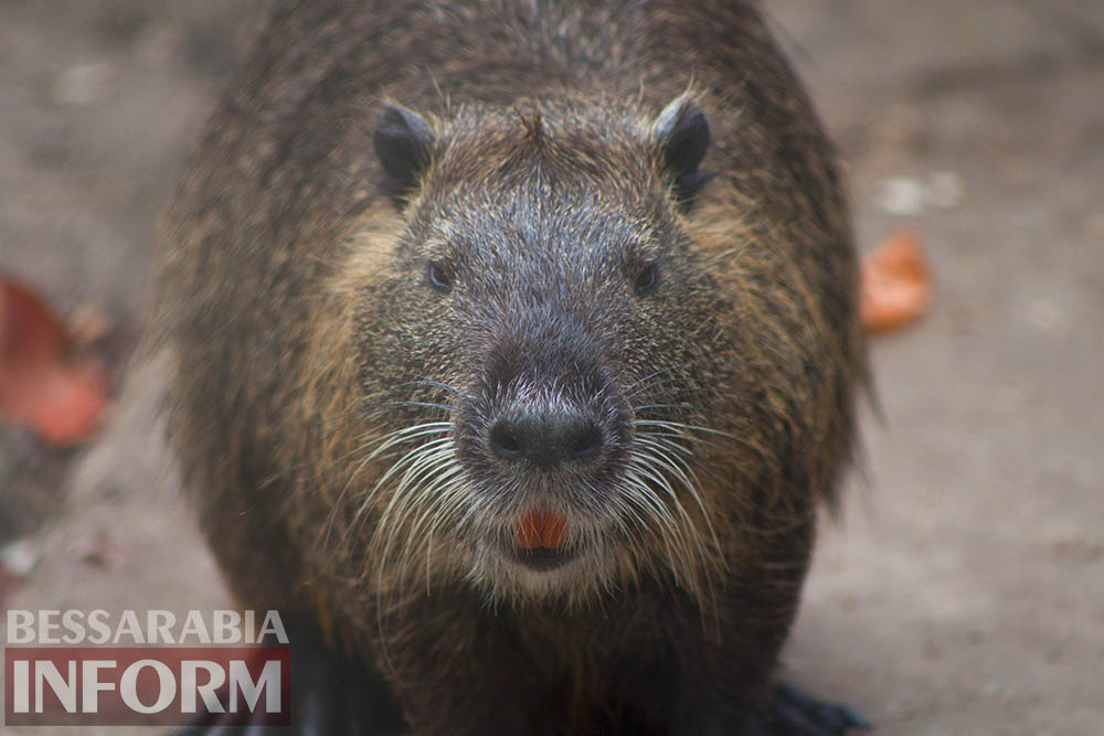 5 Измаильская СЮН: колорит мини-зоопарка(фоторепортаж)