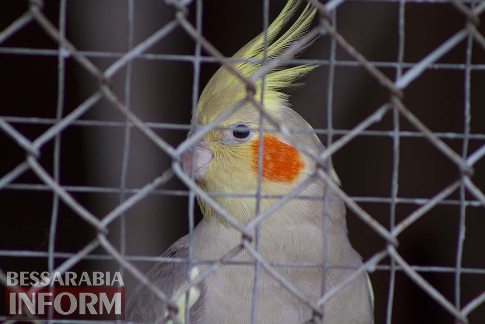 71 Измаильская СЮН: колорит мини-зоопарка(фоторепортаж)