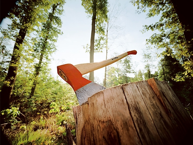 dbb0530c_5354d6c7e8d7b66b062edd2c В Болградском р-не массово уничтожают леса