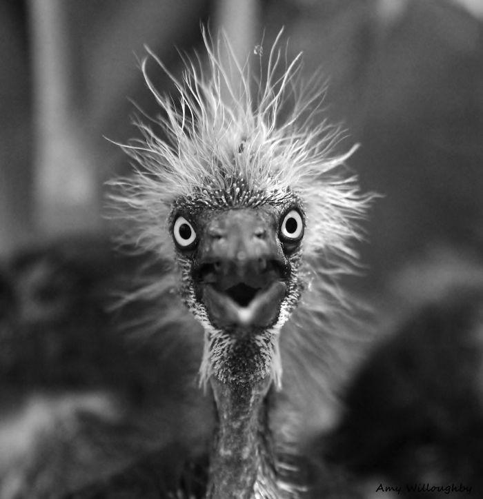 Юмор: фото животных, шокированных происходящим