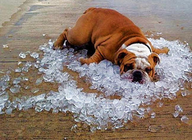 Как с комфортом пережить жаркое лето