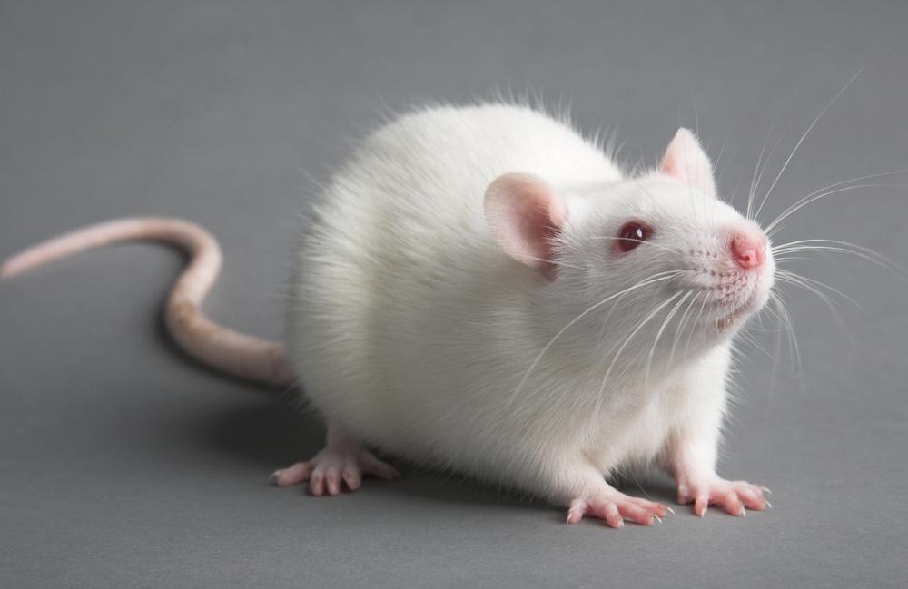 GenFondLab2 Ученые научились восстанавливать утраченную память
