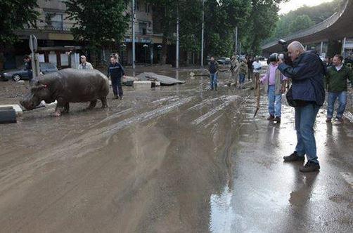 navodnenie-v-tbilisi-foto-quanza_bot_rect_545d767cea6504b802907f688e79b583 Наводнение в Тбилиси: по улицам плавают крокодилы и ходят носороги (фото)